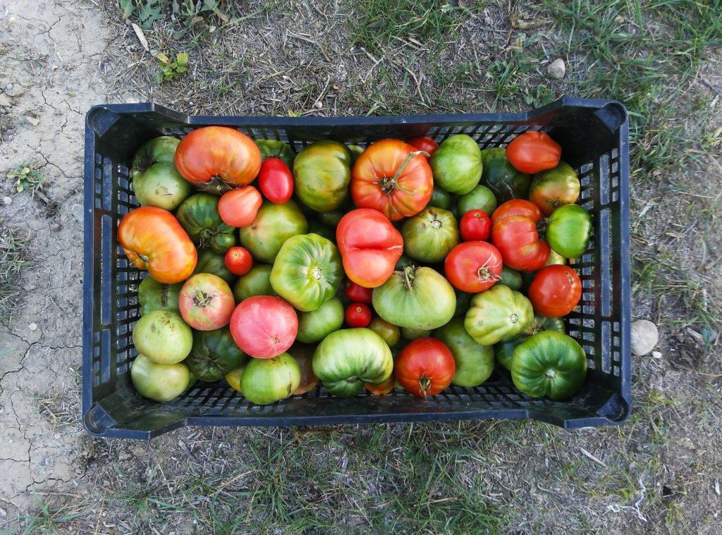 Tomates Asturianos